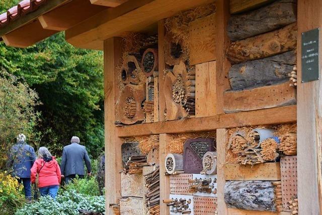 Schwarzwaldverein errichtet im Glotterteil ein prächtiges Bienenhaus