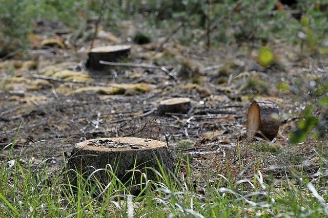 Keine Besserung für Hartheimer Wald in Sicht