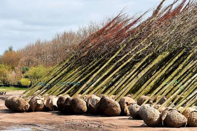 In Rust sollen 1000 Bäume gepflanzt werden