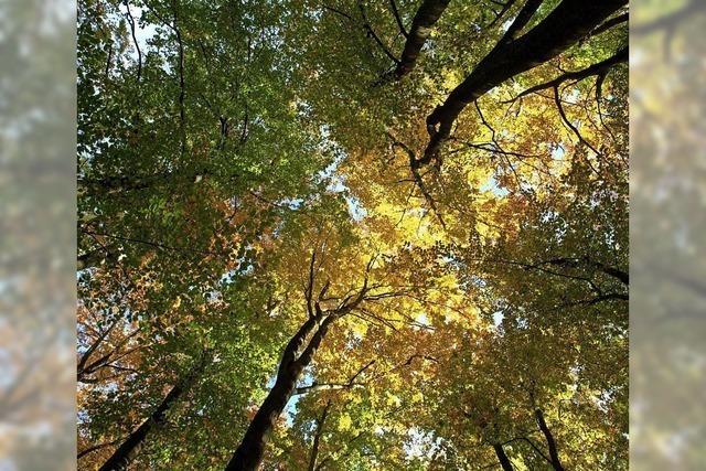 Der Holzvorrat wächst