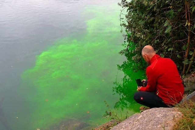 Färbeversuch am Rhein bei Rheinfelden hat ein Ergebnis erbracht