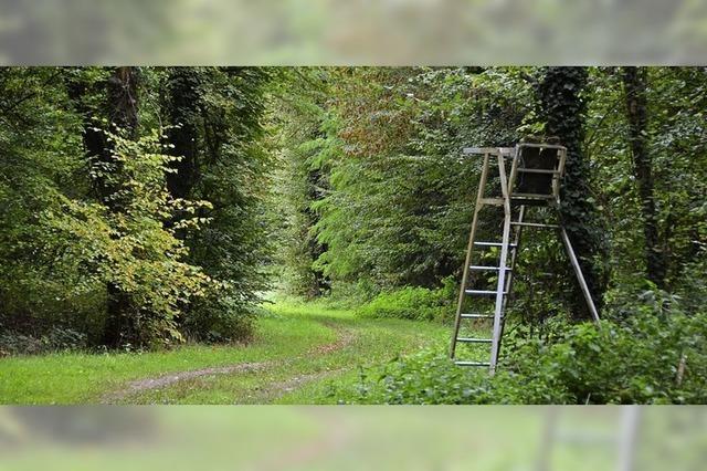 Vom Nazi-Wall zum Munitionslager: Ein Wald bei Forchheim birgt unbekannte Altlasten