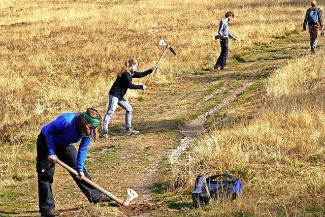 Mit der Säge und Pflanzhacke freiwillig im Dienste der Natur