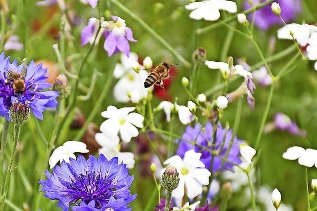 So können städtische Gärtner die Artenvielfalt fördern
