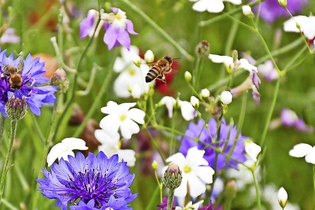 Lebensraum für Insekten schaffen &#821...en sich immer mehr Gemeinden zum Ziel.  | Foto: Barbara Ruda