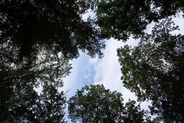 Die Allmend ist ein wertvoller Wald – und bedroht