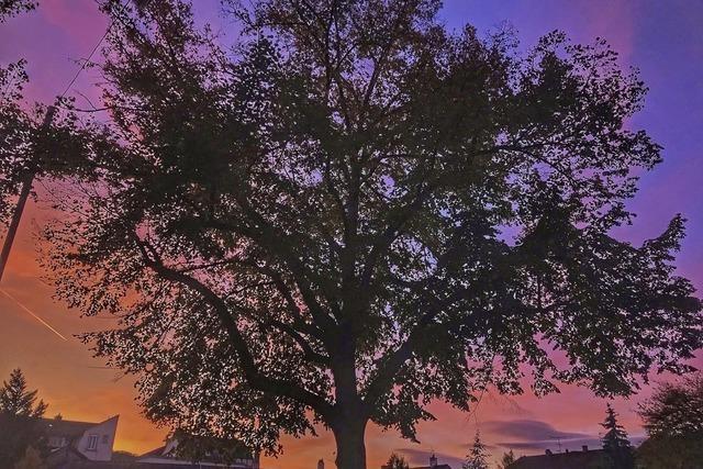 Baum vor Abendröte
