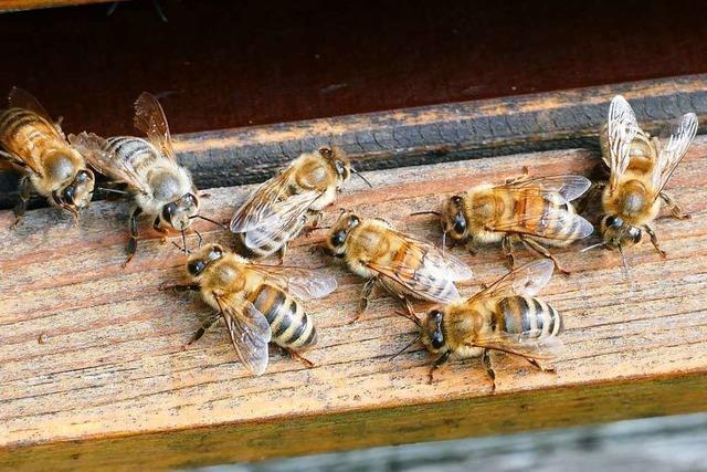 Bauern wollen Volksantrag gegen Bienen-Volksbegehren starten