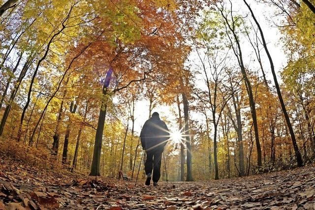 Der Ruster Wald wirft keinen Gewinn ab