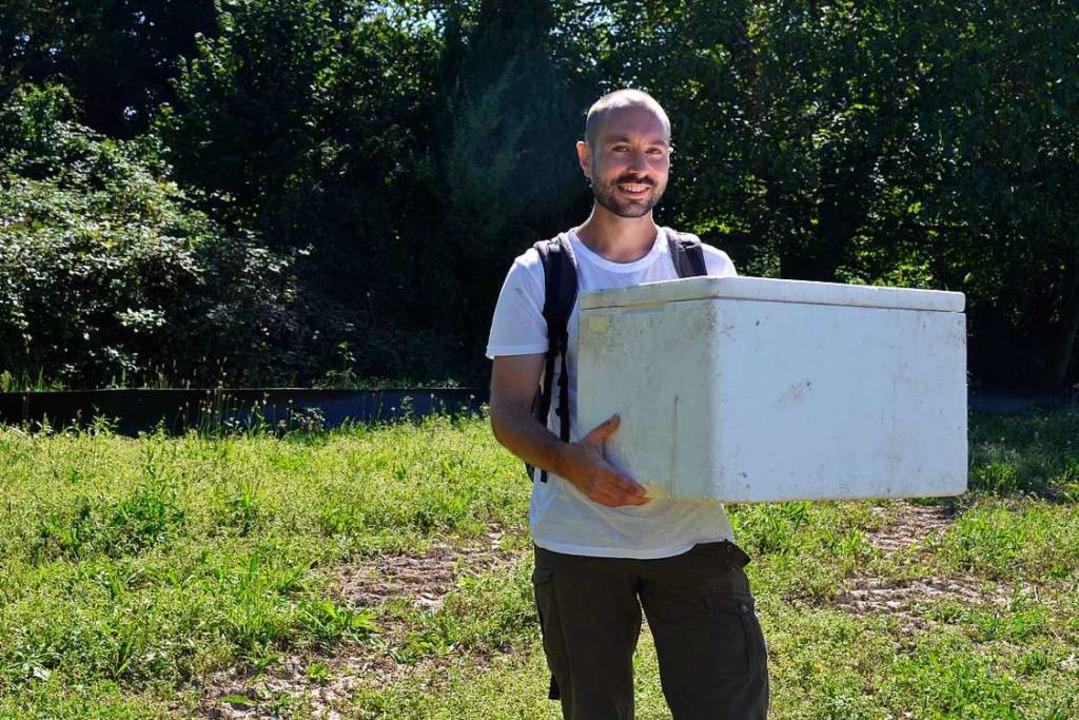 Michael Bauer trägt eine Box voller eingefangener Eidechsen zum neuen Habitat.  | Foto: Savera Kang