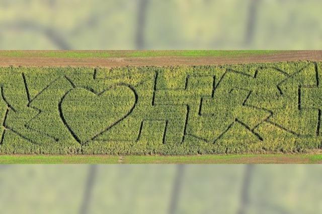 Maislabyrinth in Kandern-Wollbach