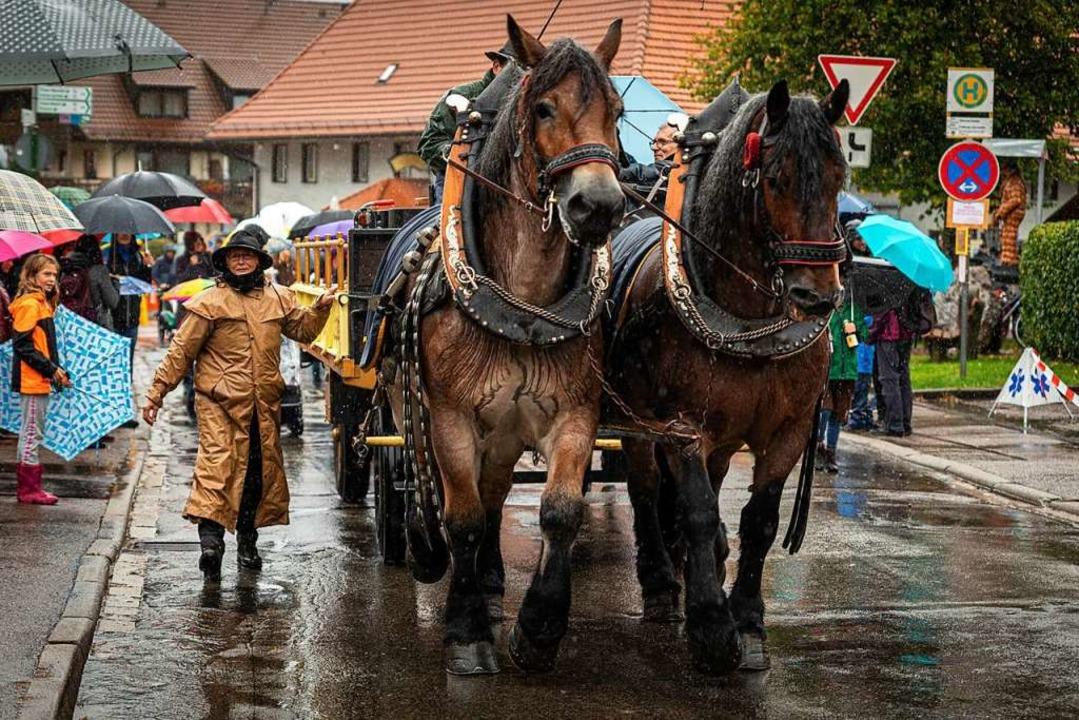 Auch diesen Pferden konnte der Regen nichts anhaben.  | Foto: Hubert Gemmert
