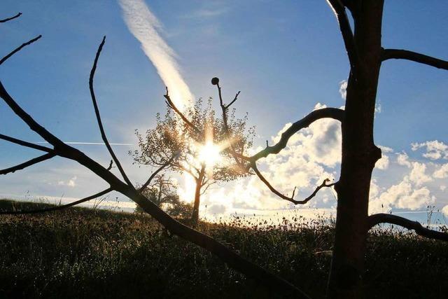 In Sexau brennt scheinbar der Baum