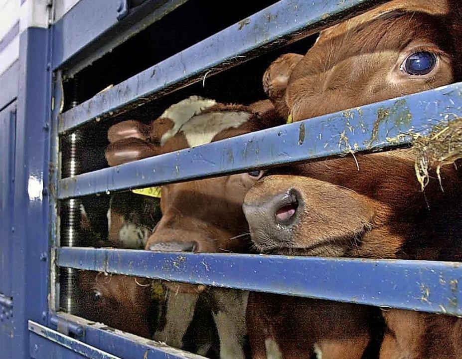Überlange Transporte sind eine Qual für die Tiere.  | Foto: Ulrich_Perrey