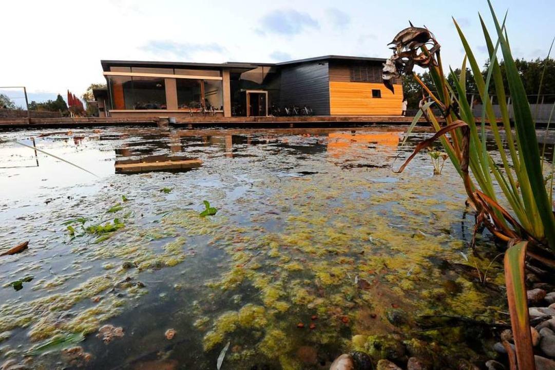 Dicke Algenschicht im See am Denzlinge...rgerhaus – kein schöner Anblick.  | Foto: Markus Zimmermann