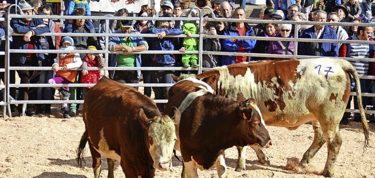 Hat sich zu einem Publikumsmagnet gemausert: der Weideviehmarkt in Wies.  | Foto: Edgar Steinfelder