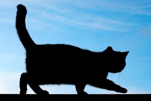 18-Jährige will Katze ausweichen und verursacht einen Unfall
