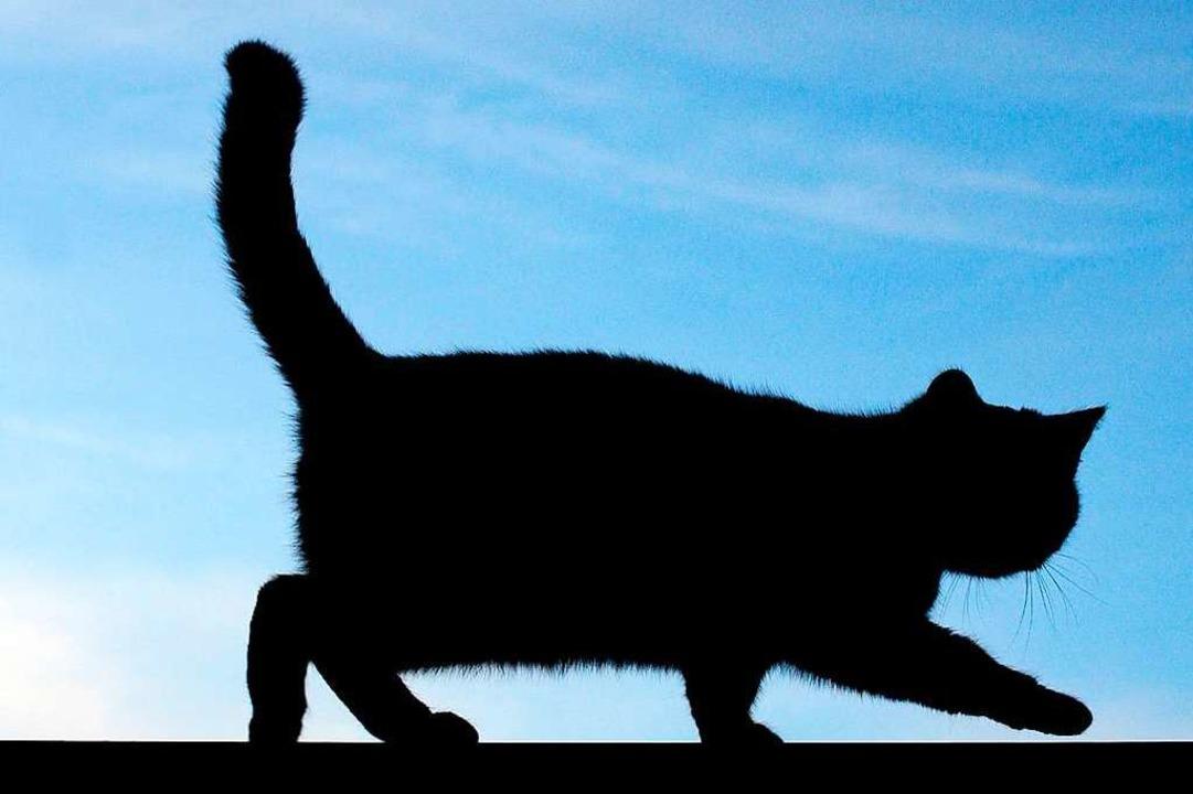 Die Fahrerin sagte, sie habe einer Katze ausweichen wollen (Symbolbild).    Foto: Patrick Pleul