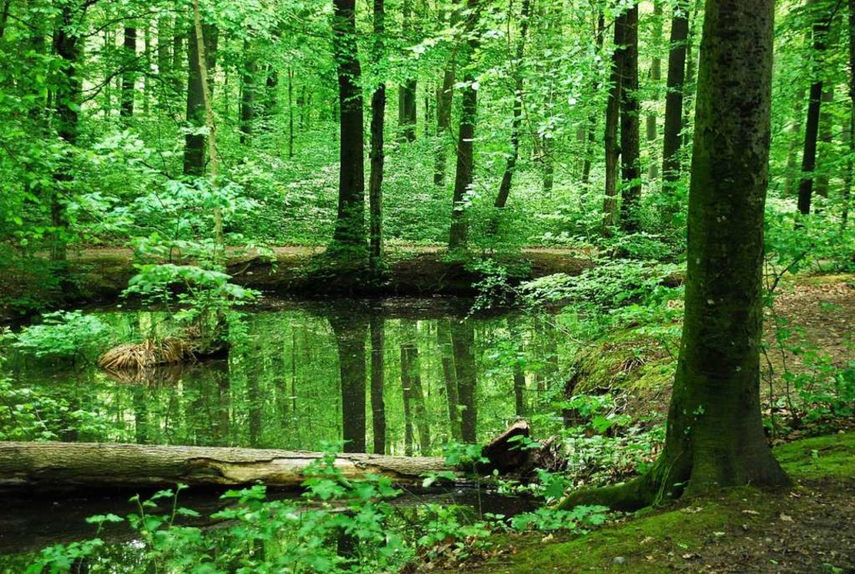 Ein  Waldspaziergang wie hier in Grenzach-Wyhlen hilft der Gesundheit.  | Foto: Ralf Staub