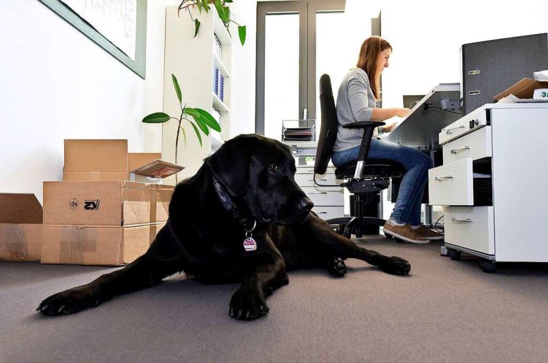 Nicht bellen, nicht beißen, entspannt ...scheint seinen Bürojob gut zu machen.   | Foto: Thomas Kunz