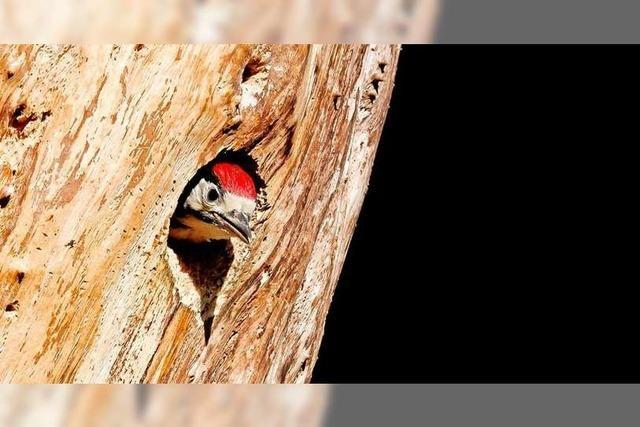 Schopfheim will ein Ökokonto einrichten – das birgt Tücken