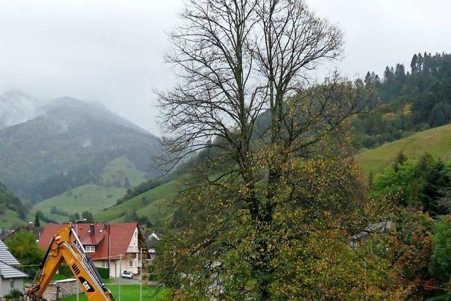 100-jährige Münstertäler Dorflinde hätte erhalten werden können