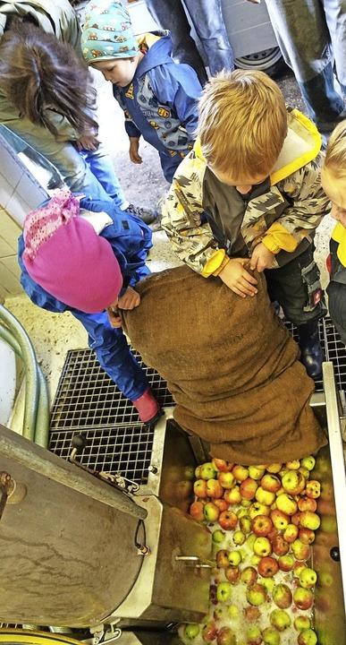Auf Apfelsaft aus ungespritzten Äpfeln... ihren eigenen Apfelsaft herzustellen.  | Foto: Martha Weishaar