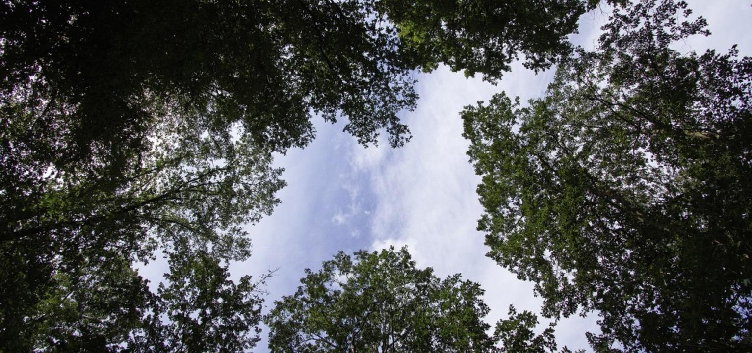 Der Wald als Ort schlimmer Verbrechen ...der Allmend passierte, bleibt ungenau.  | Foto: Patrik Müller
