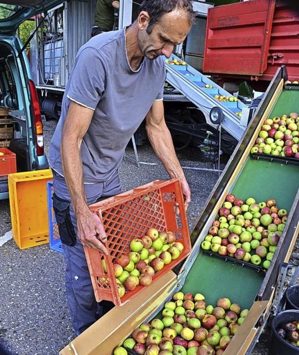 Kunden wie Markus Schätzle liefern ihr...rderband geht's in die Safterei.  | Foto: Gabriele Hennicke