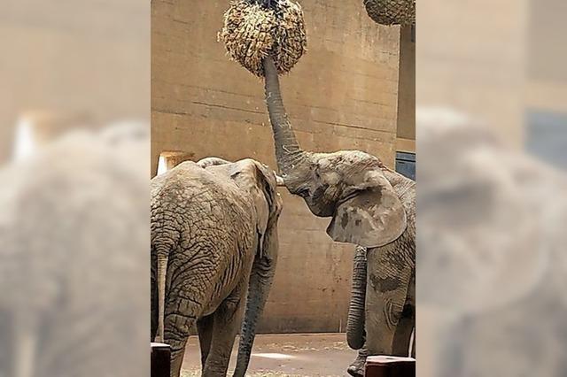 Bei Elefanten und Nashörnern