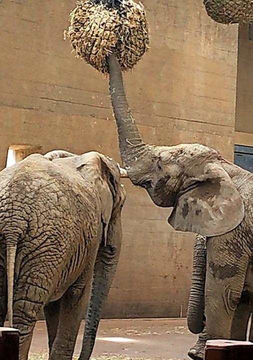 Im Elefantenhaus   | Foto: Penelope Mara Pascarella