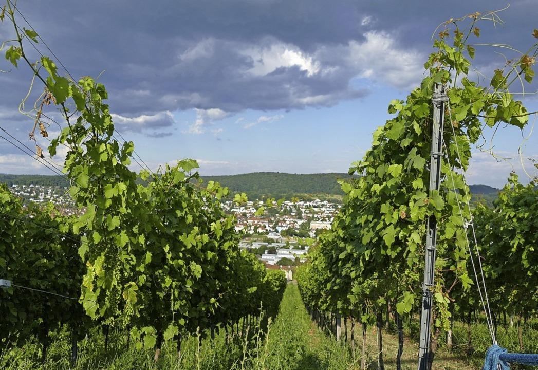 Der Wein ist lange schon ein Markenzeichen des Markgräflerlands.  | Foto: Peter Gerigk