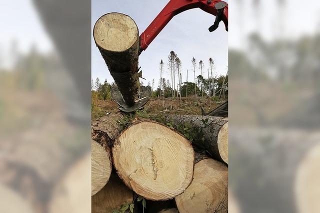 Holzeinschlag verdreifacht