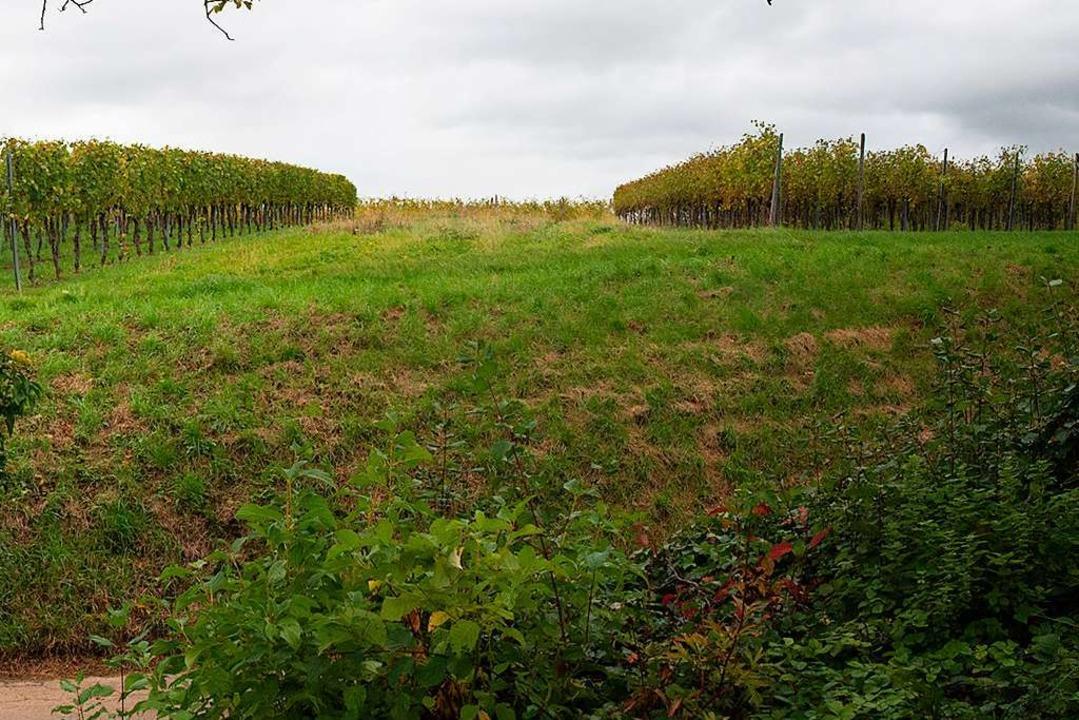 Grundstückseigentümer wollen in Britzi... Heilweges ein Wohngebiet konzipieren.    Foto: Volker Münch