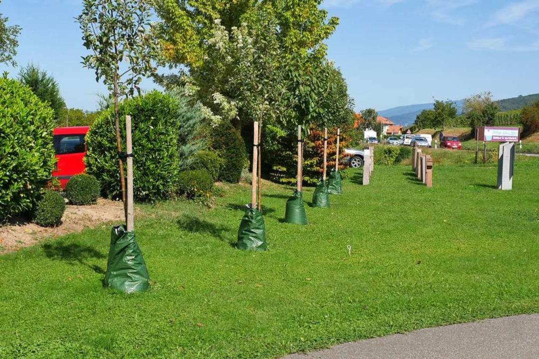 Die Gärtnerei Müller in Schallstadt ha...n Bau ihres Gartencenters zu pflanzen.  | Foto: Jannik Jürgens