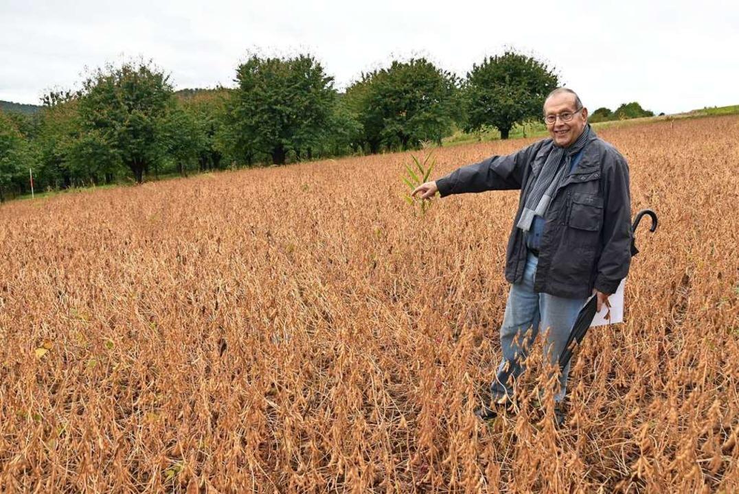 Friedhelm Gröteke vom ehrenamtlichen A... wurde. Heute wachsen dort Sojabohnen.  | Foto: Manfred Frietsch