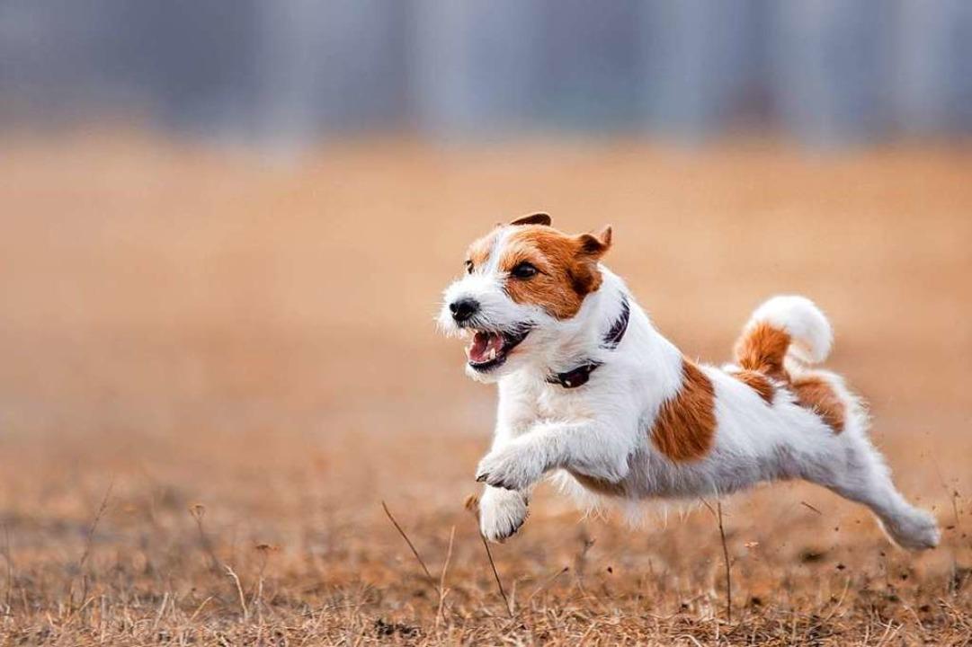 Hund im Anflug – wie verhalten, ...  und das Herrchen nicht in Sicht ist?  | Foto: annaav - stock.adobe.com
