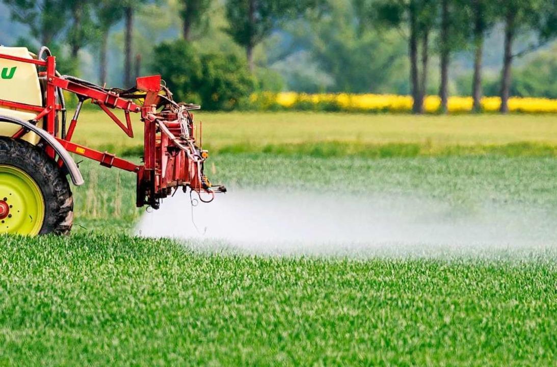 Pestizid im Visier: Offenbar gibt&#821...über den dramatischen Insektenschwund.  | Foto: Patrick Pleul