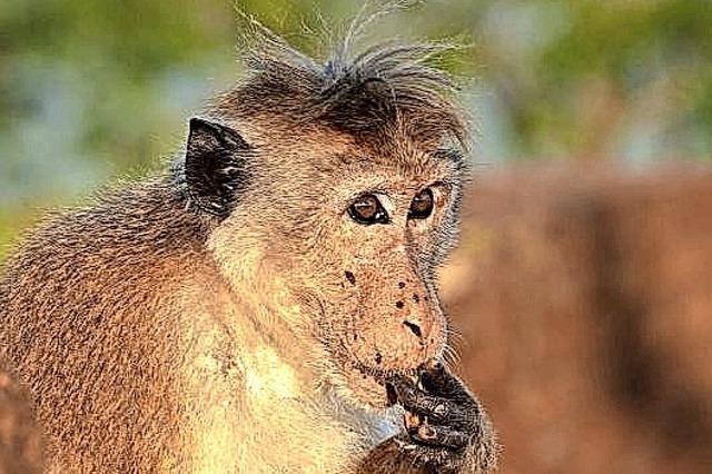 Dr. Hellmut Aldinger, Lichtbildervortrag Sri Lanka: Vögel - Affen - Elefanten - Insel des Ceylon Tees mit ihrer vielfältigen Natur. In Lenzkirch