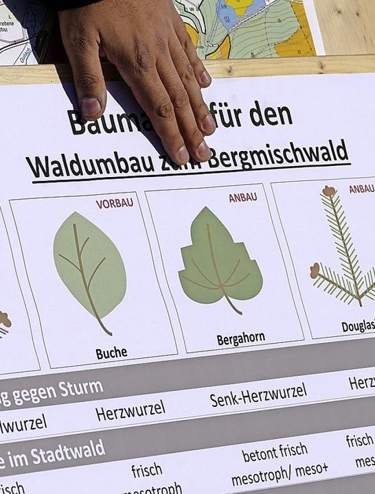 Welche Baumarten in Zukunft im Stadtwa...zinieren auch die jüngsten Teilnehmer.  | Foto: Tanja Bury
