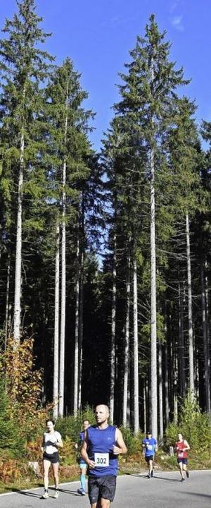 Schwitzen beim Waldbaden im Hochschwarzwald  | Foto: Wolfgang Scheu