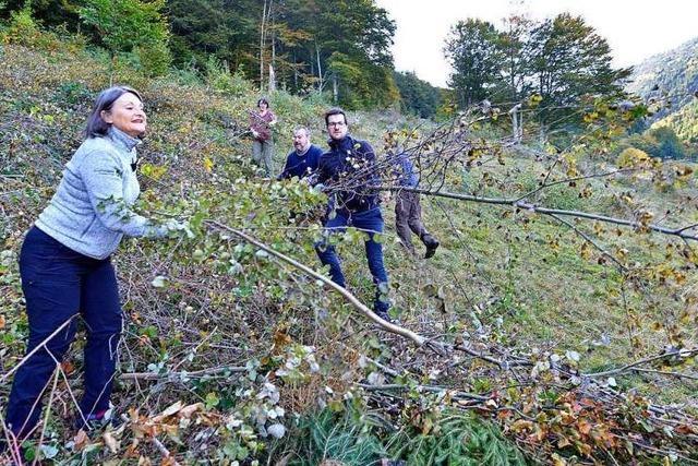 Warum Jungbäume fällen im Biosphärengebiet erwünscht war