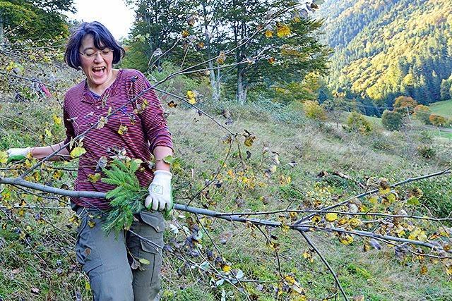 Kampf gegen Birken, Buchen und Brombeerhecken im Kappler Tal