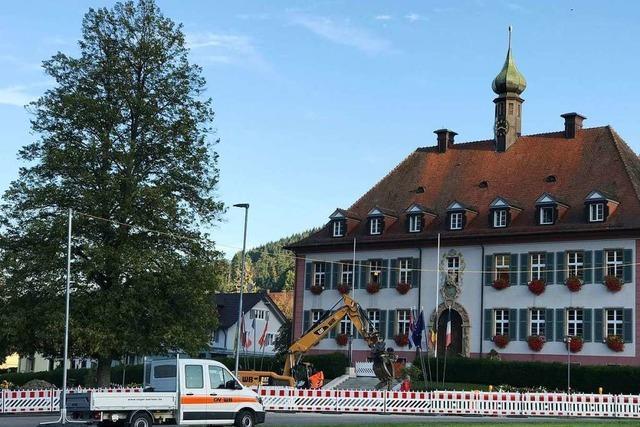 Regierungspräsidium nimmt zur Fällung der Münstertäler Linde Stellung