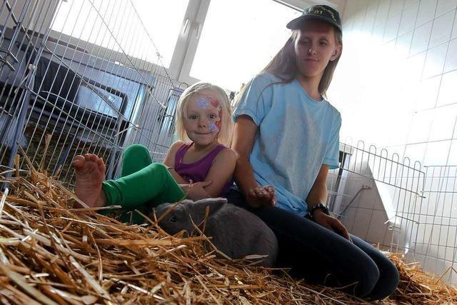 Kleintierzuchtverein March und Holzhausen zeigt mehr als 100 Tiere