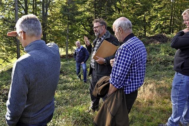 Was wird aus Münstertals Wald?