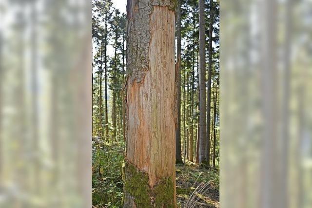 7000 Festmeter Holz stark beschädigt
