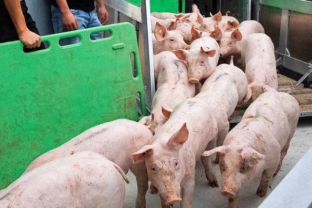 Dieser Mastbetrieb hält sich an die Vorgaben des Tierwohl-Labels
