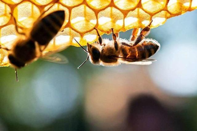 Bienenfreunde wollen vorerst nicht weiter für Volksbegehren werben