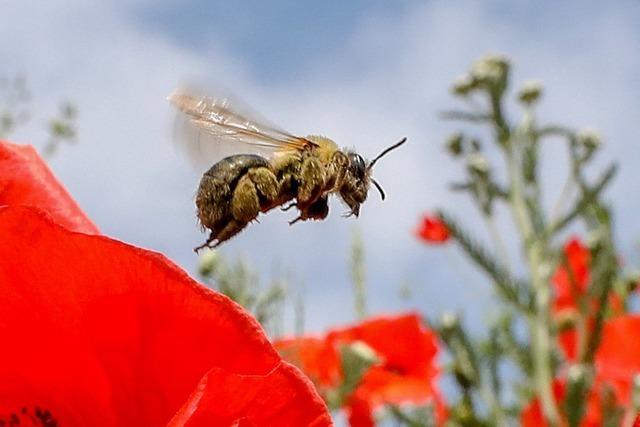 Regierung einigt sich auf Kompromiss-Angebot zum Bienen-Volksbegehren